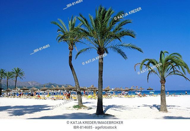 Palm beach in Alcudia, Majorca, Balearic Islands, Spain, Europe