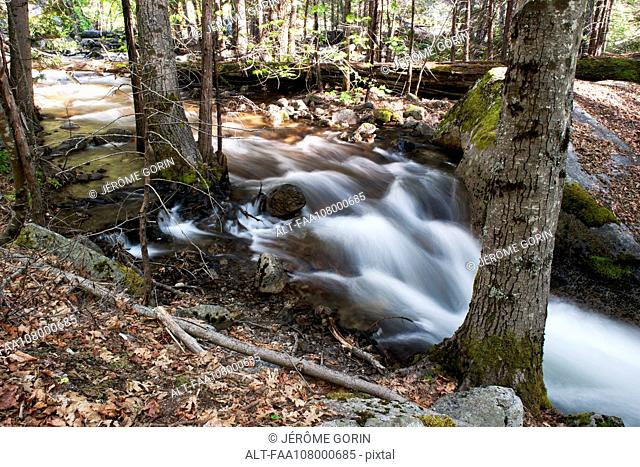 Stream flowing over rocks in forest