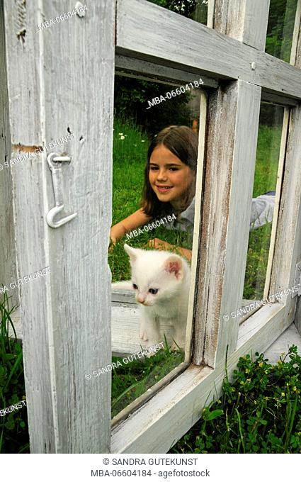 Girl plays with kitten on old white window on a meadow