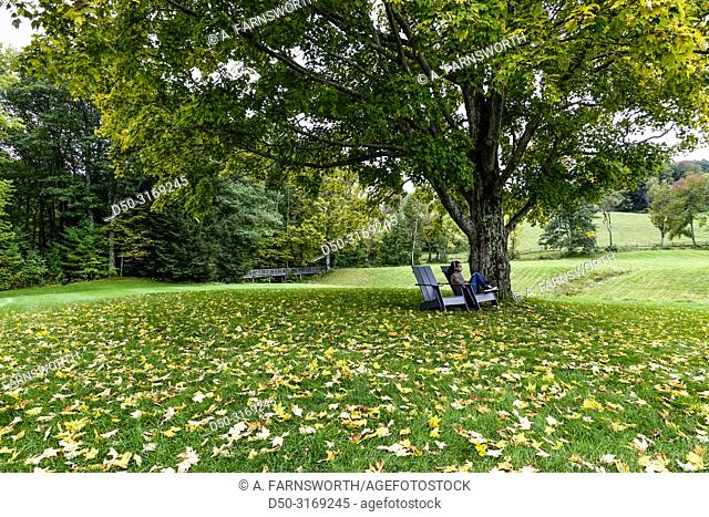 Williamstown, Massachusetts, USA A young woman sits under the foliage at the Clark Art Institute