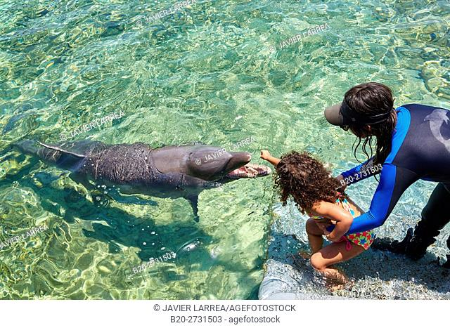 Bottlenose Dolphin (Tursiops truncatus), Oceanarium, San Martin de Pajarales island, Rosario Islands, Cartagena de Indias, Bolivar, Colombia, South America