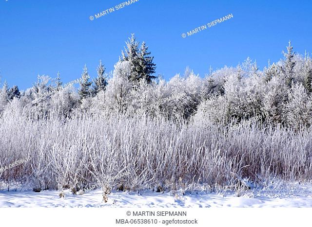 Hoarfrost in trees, nature reserve Isarauen, Geretsried, Upper Bavaria, Bavaria, Germany
