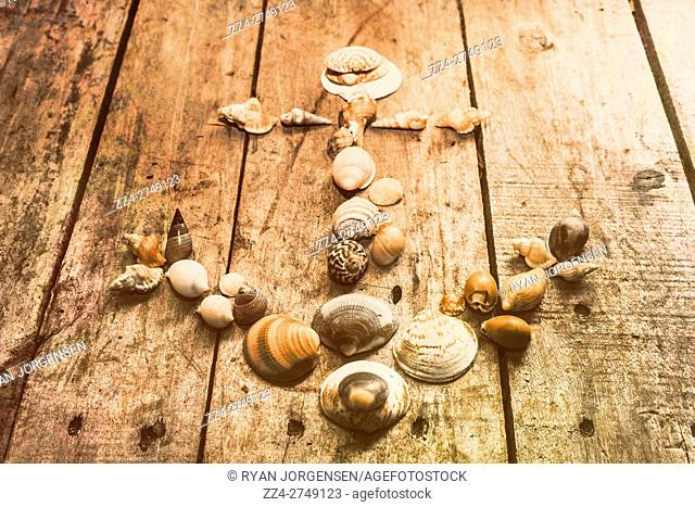 Background composed of various sized sea shells placed on a wooden slat table in the shape of an anchor