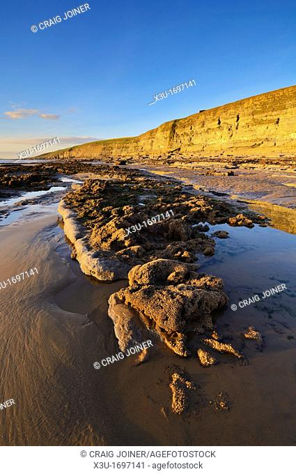 The reef of the Honeycomb Worm at Dunraven bay in the winter sun at Southerndown on the Glamorgan Heritage Coast, Wales