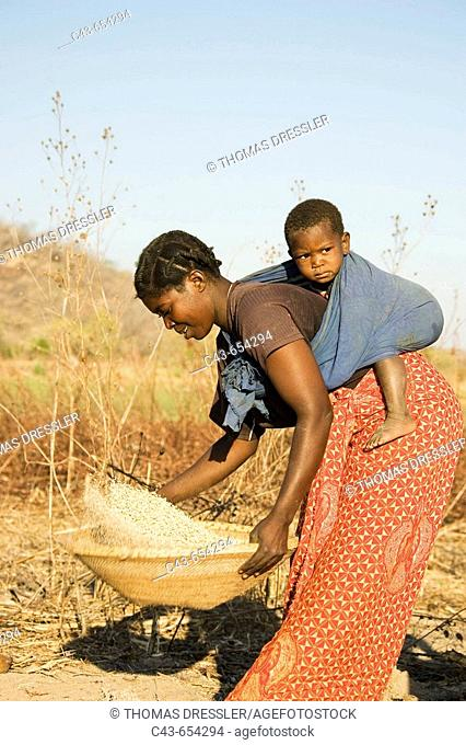 Zambia. Tonga woman with child on her back pounding grain near the shore of Lake Kariba, a man-made dam between Zambia and Zimbabwe which is 220 km long and up...