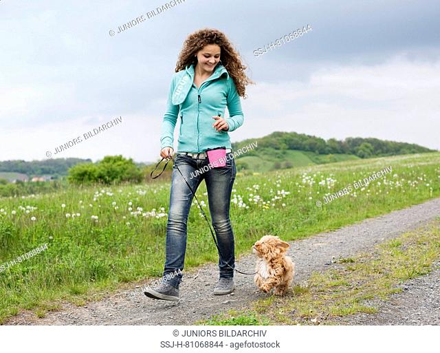 Havanese. Puppy walking next to a woman, looking up. Germany