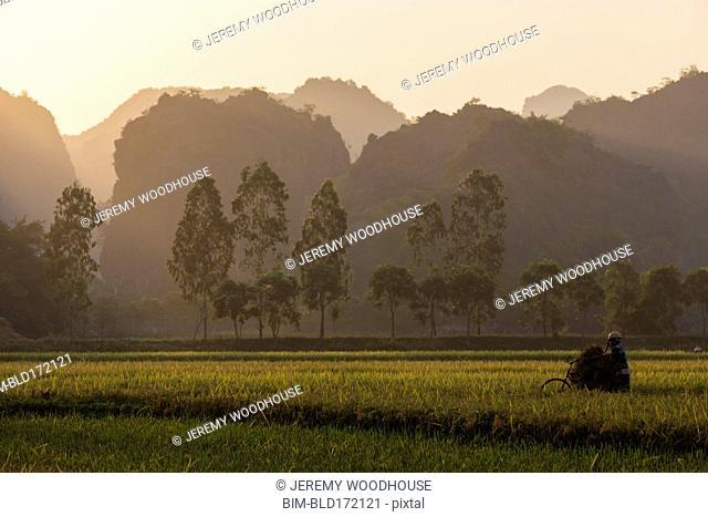 Farmer working in rice fields in rural landscape