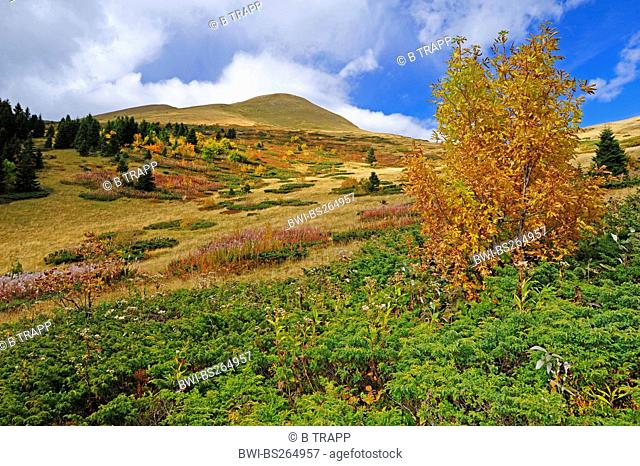 mountain meadow in autumn colours, Montenegro, Biogradska Gora National Park
