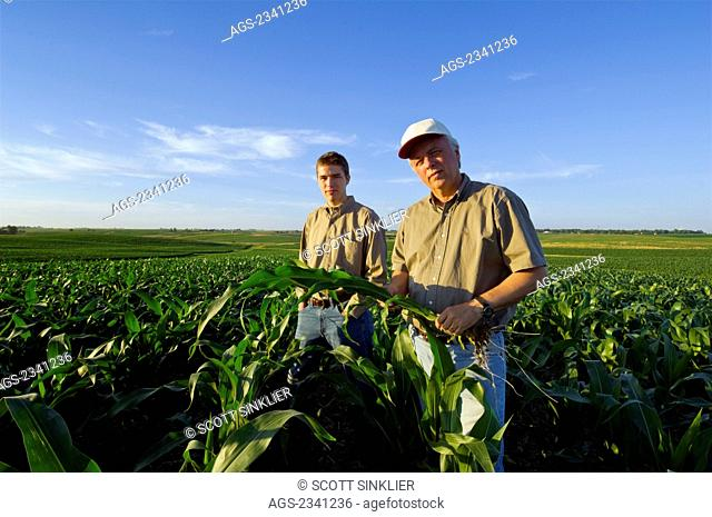 Agriculture - A farmer and his son pose while inspecting a mid growth corn plant in the field in late afternoon light / Iowa, USA