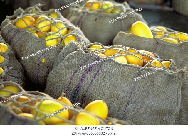 Burlap sacks filled with fresh squash
