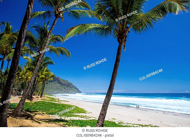 Beach landscape with palm trees and Indian Ocean, Reunion Island