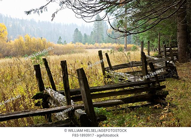 Wawona area, Yosemite National Park, California, USA, split rail fence at edge of meadow with cedars, pines, and willows, rainy day, November