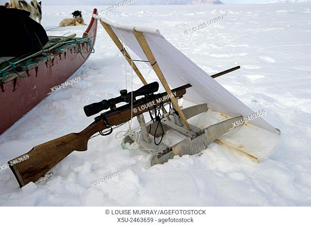 On spring sea ice Gedion Kristiansen, Inuit,Inughiut, hunter prepares his rifle blind for seal hunting. The blind is mounted on a small wooden sled with...