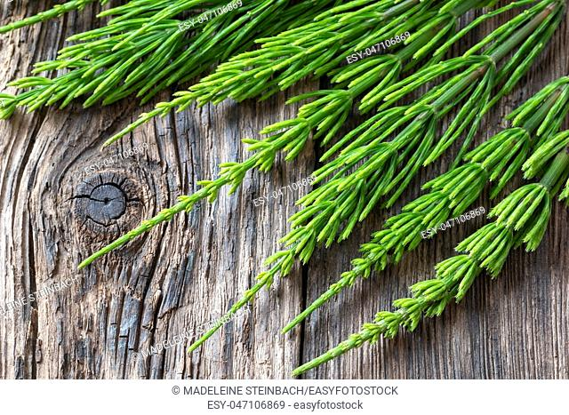 Fresh horsetail twigs on a rustic wooden background