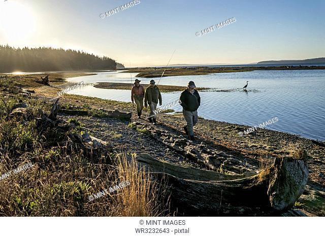 Two fly fisherman and a guide walk past a great blue heron along a salt water beach estuary while fishing for searun coastal cutthroat trout and salmon at...