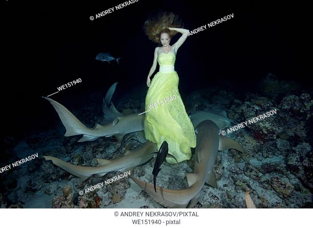 Young beautiful woman in yellow dress posing underwater with Tawny nurse sharks (Nebrius ferrugineus), night shooting, Indian Ocean, Maldives