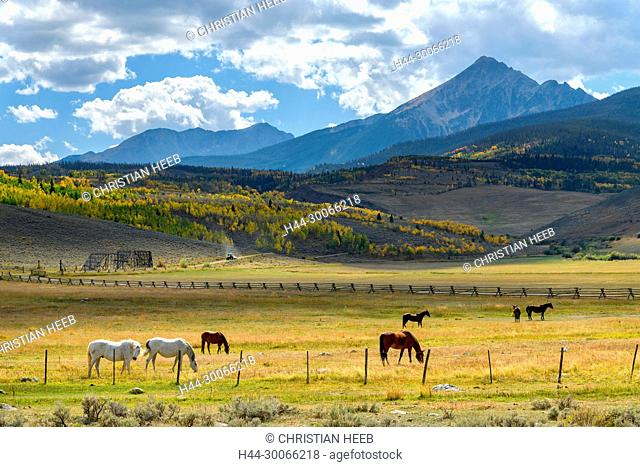 North America, American, USA, Rocky Mountains, Colorado, Horses near White Sulphur Springs