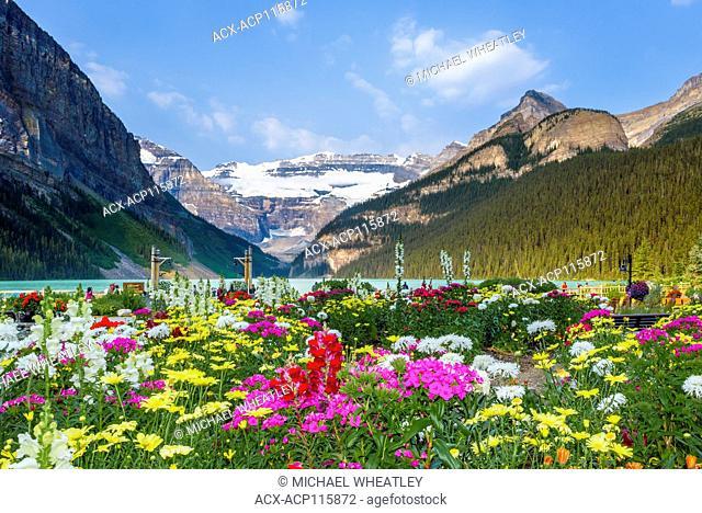 Garden flowers, Lake Louise, Banff National Park, Alberta, Canada