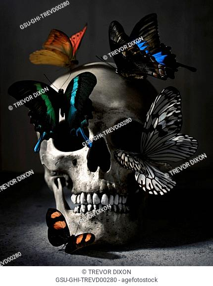 Human Skull and Butterflies