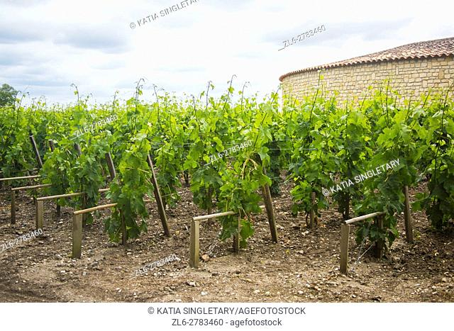 Gorgeous sky and landscapes of vineyard on a summer day in medoc vineyards at bordeaux France, the best wine in world. Vines lined up growing next to the castle