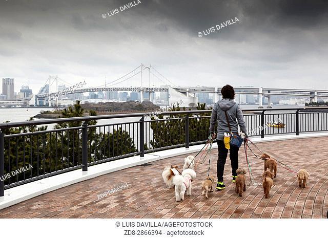 Dog walker in Tokyo Bay at Rainbow Bridge. Tokyo