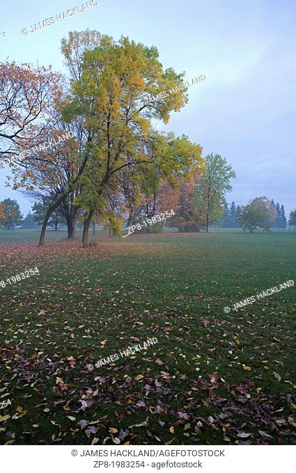 Misty park Scene during autumn in Markham, Ontario, Canada
