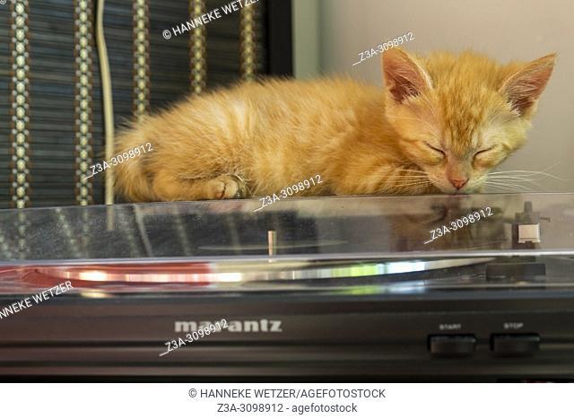 Cute kitten sleeping on a record player