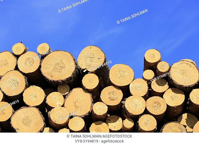Stacked pine logs against blue sky on a beautiful day of spring