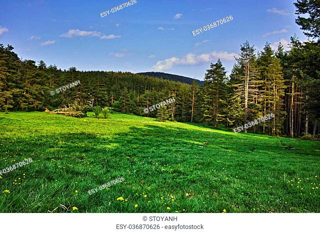 Green Forest Landscape in Rhodopes Mountain, Bulgaria
