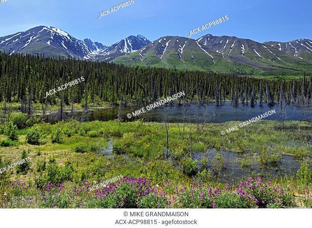 St. Elias Mountains near Haines Junction Yukon Canada