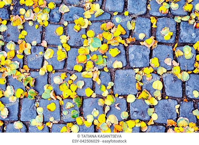 Autumn background. Yellow autumn leaves on a square Old stone tile in the city