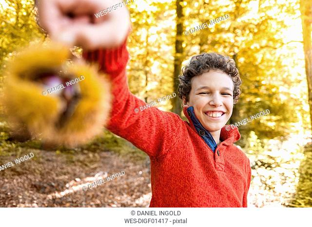 Portrait of smiling boy with sweet chestnut in the autumnal forest