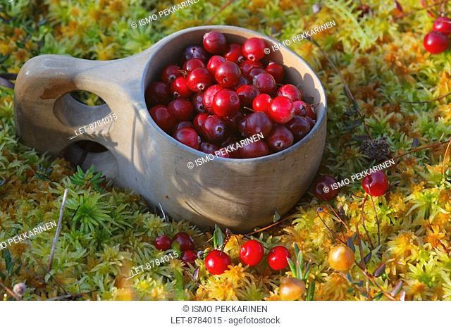 Mooseberries