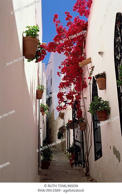 Bougainvillea in a narrow whitewashed street in upper village, Mojacar, Almeria, Andalucia Andalusia, Spain, Europe