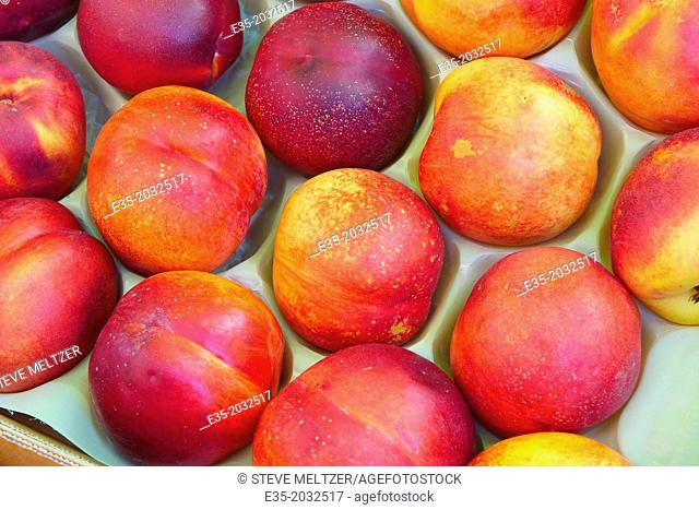 Fresh nectarines on sale at a farmstand
