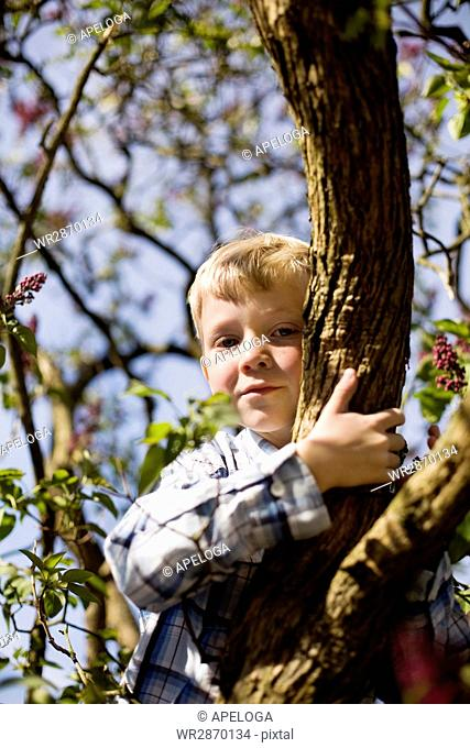 Low angle portrait of boy sitting on branch