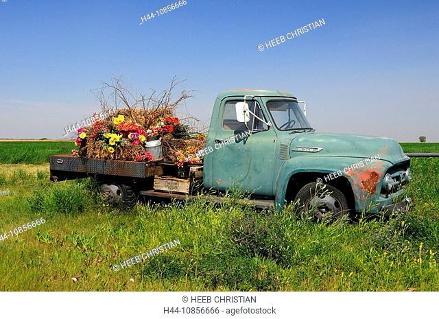 10856666, Canada, Flowers, Old Pickup Truck, near