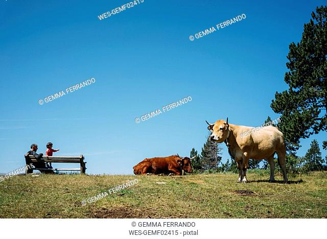 France, Osseja, father and little girl resting on a bench in the mountains watching cows