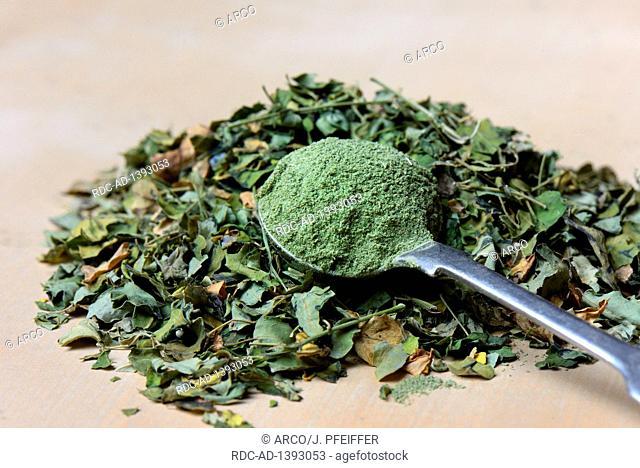 Dried Moringa leaves and Moringa powder, Moringa oleifera