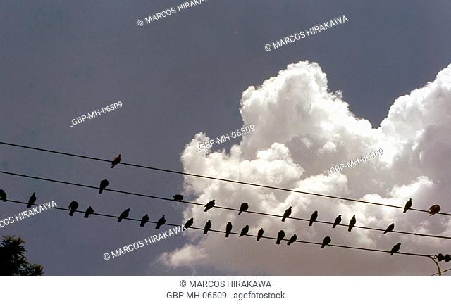 Birds, threads