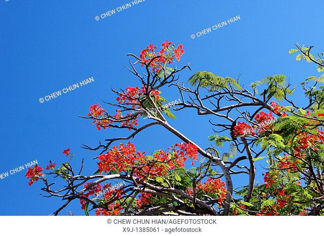 Red Flower And Blue Sky