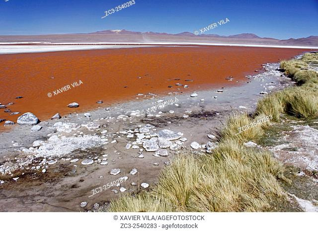 Laguna Colorada, red lagoon with salt, near the salar de Uyuni, national reserve of Andean Fauna Eduardo Avaroa in the South Lipez Province