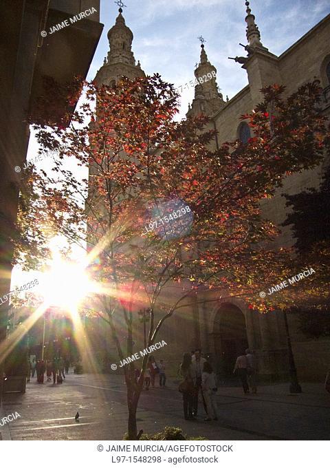Late sun through tree next to Logroño cathedral, Spain