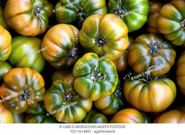Fresh tomatoes sold at the street market of Campo dei Fiori, Rome, Lazio, Italy, Europe