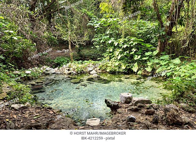 Spring with water, Arroyo de la Boza Azul, Apazapan, Veracruz, Mexico
