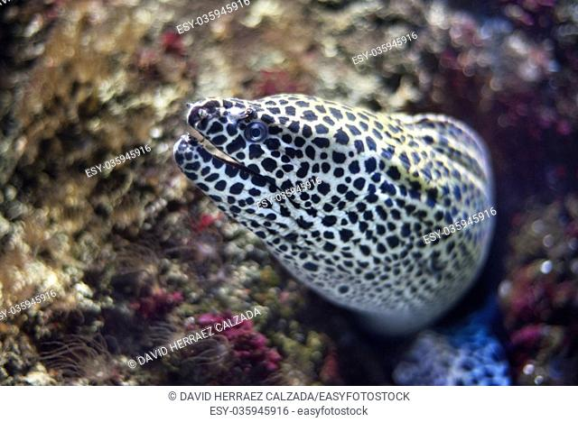 Close up view of a moray fish in the aquarium