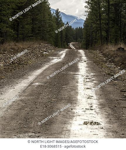 Canada, BC, Elko. Dirt logging road near Kikomun Provincial Park in the Canadian Rocky Mountains