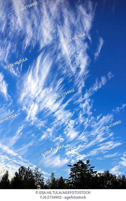 Cirrus fibratus clouds, Finland