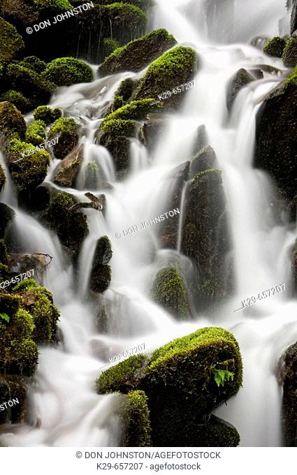 Mossy cascade in tributary of Middle Prong of Little River. Great Smoky Mountains National Park, Tennessee, Appalachian, USA