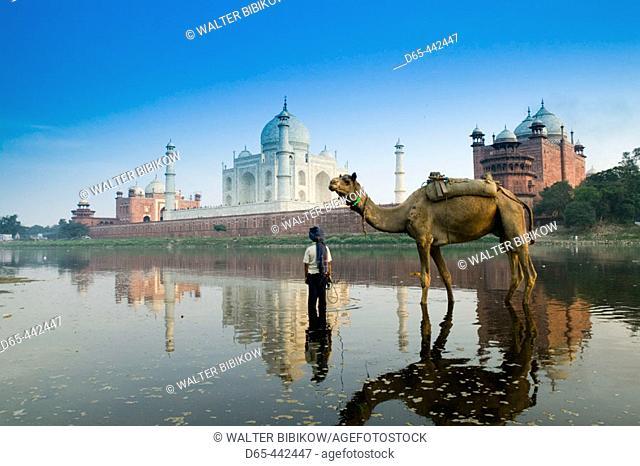 Taj Mahal- Indian Boy and Camel in Yamuna River. Agra. Uttar Pradesh. India